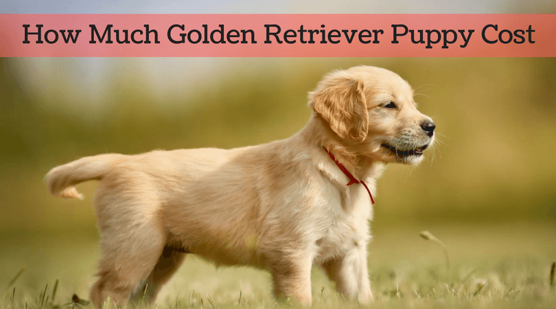 How much golden retriever puppy cost in 2017